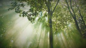 La lumière est la source de la vie
