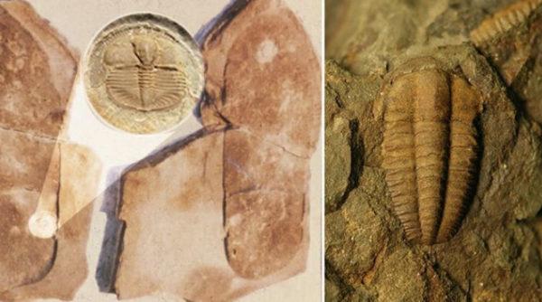 Un fossile avec une empreinte humaine, les humains auraient-ils coexisté avec cet animal il y a 250 millions d'années ?