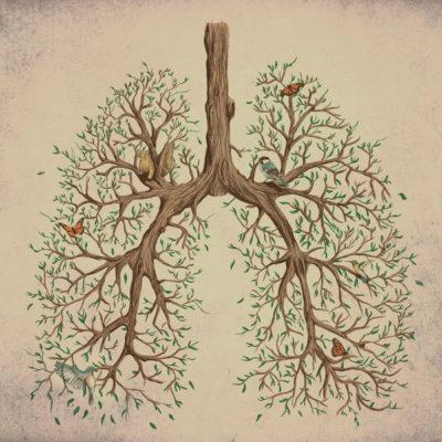 Ayurvéda & Symbolique : La gorge & les poumons