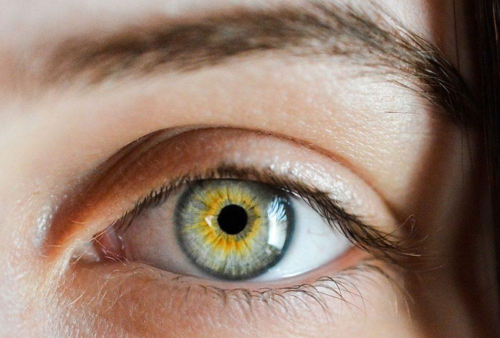 L'oeil, un écosystème qui se nourrit de ses propres déchets