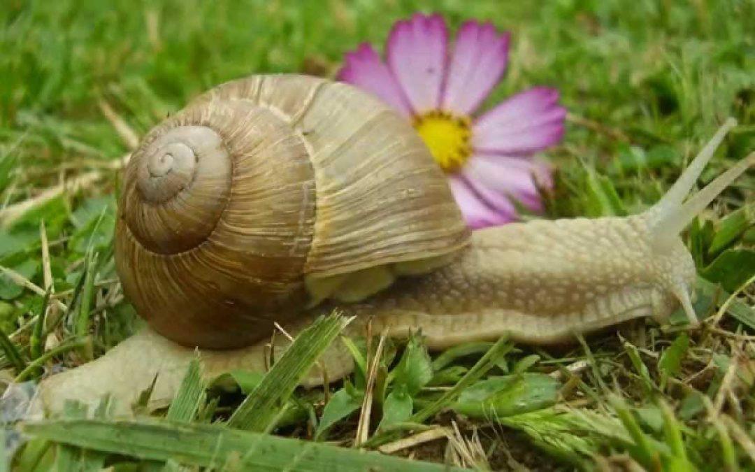 Ne soyez pas comme des escargots croyant êtres à l'abri dans leurs coquilles!