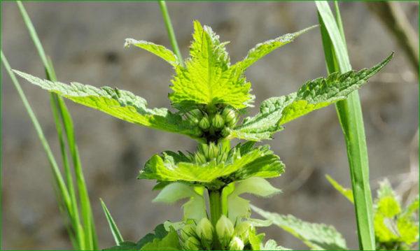 Les plantes et leur Signature Fréquentielle