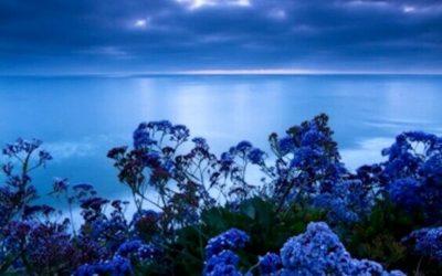 La couleur qui réduit le stress : la tonalité du calme