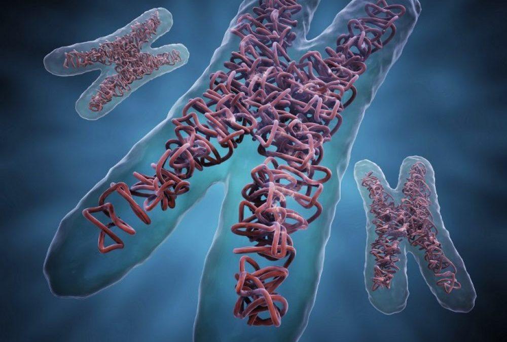Une protéine qui dénoue l'ADN au rythme de l'horloge biologique