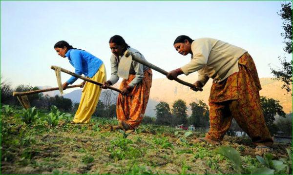 Les gardiennes des graines en Inde !