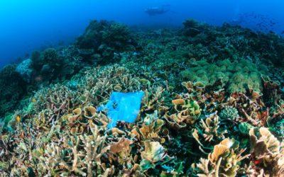 Une nouvelle zone océanique a été découverte avec ses dizaines d'espèces de poisson inconnues