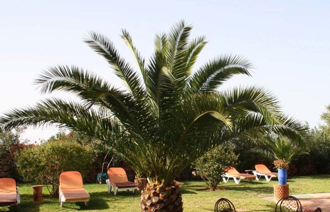 Cet hiver… réchauffez-vous au Maroc