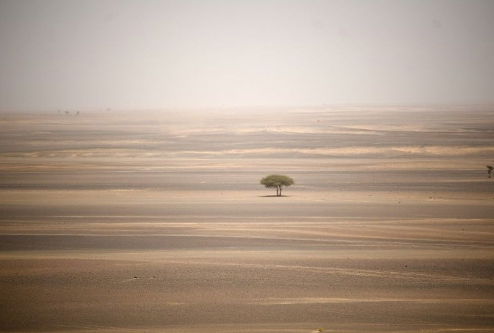 Sahara : éoliennes et centrales solaires pourraient modifier localement le climat