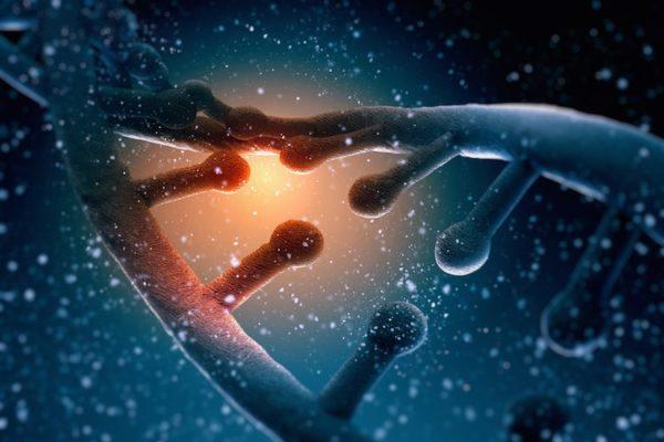 Des recherches démontrent que les mémoires épigénétiques se transmettent sur 14 générations