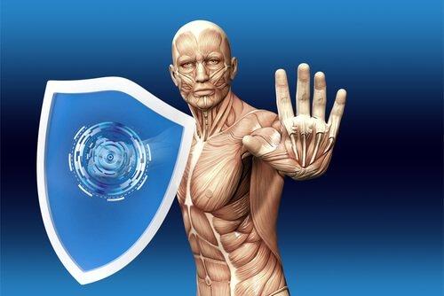 Les composantes de la réponse immunitaire