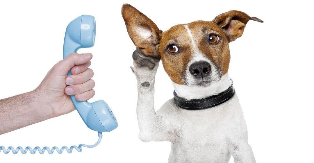 Venez pratiquer la communication animale!