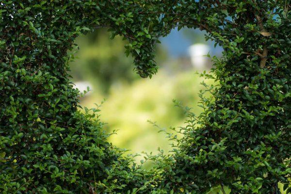 Don Miguel Ruiz : le pouvoir de l'amour