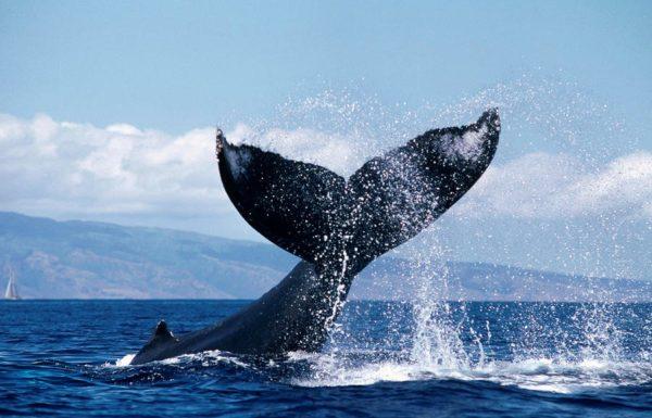 Message des baleines – tout bouge partout dans le monde comme tout bouge en ce moment dans votre monde intérieur!