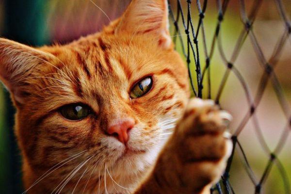 Les gens qui aiment les chats