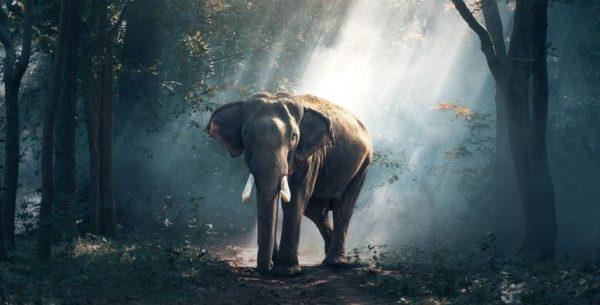 """Journée de la Terre 2019 : """"protéger nos espèces"""""""
