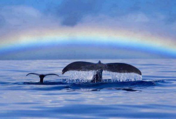 Message des baleines – le pouvoir du choix, d'hiver à aujourd'hui!