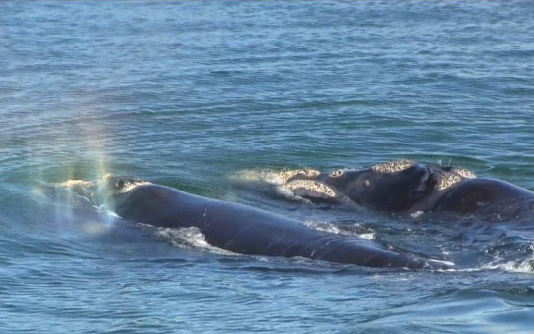 Message des baleines – naître au nouveau est souvent très déstabilisant !