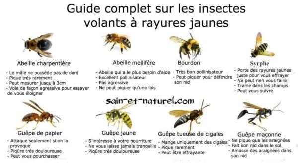 Guide complet sur les insectes volants à rayures jaunes