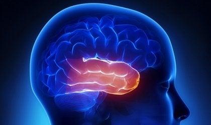 Lobe temporal : la zone de l'affectivité et de la mémoire