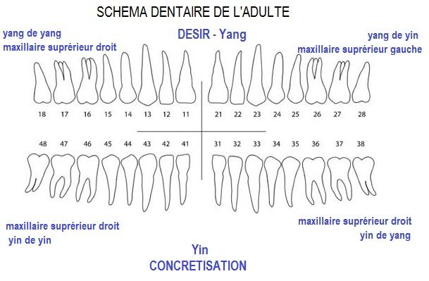 Le langage des dents