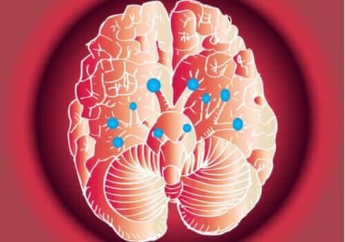 Les 12 paires de nerfs crâniens et leurs fonctions