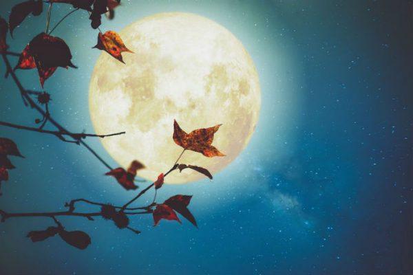 11 Rituels de Pleine Lune pour manifester avec le pouvoir de la Lune