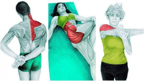 36 photos pour voir quel muscle vous êtes en train d'étirer