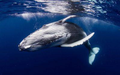 Des signes d'espoir pour sauver la vie dans les océans