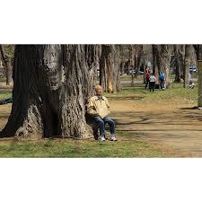 Penser la canopée urbaine pour réduire les allergies